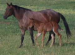 Pictured as a foal